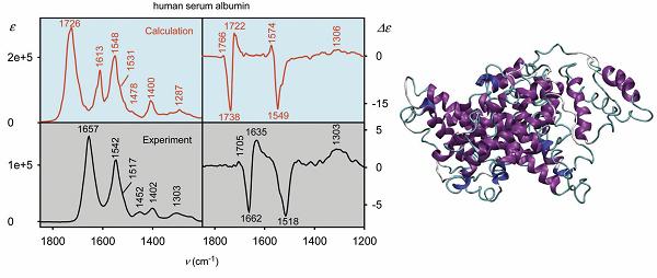 Simulovaná a experimentální VOA spektra alpha-helikálního proteinu